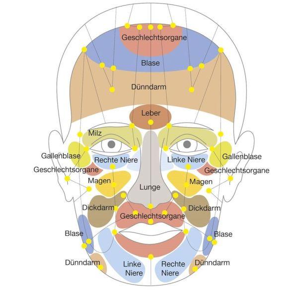 Gesichtsmeridiane