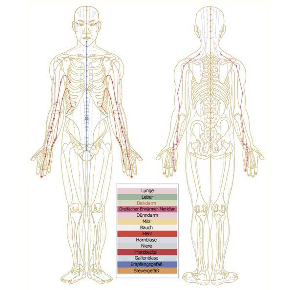 Körpermeridiane