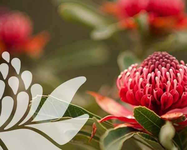 Set und Zubehör Bush Flowers
